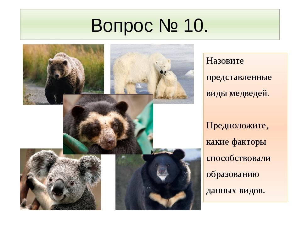 Вопрос № 10. Назовите представленные виды медведей. Предположите, какие факто...