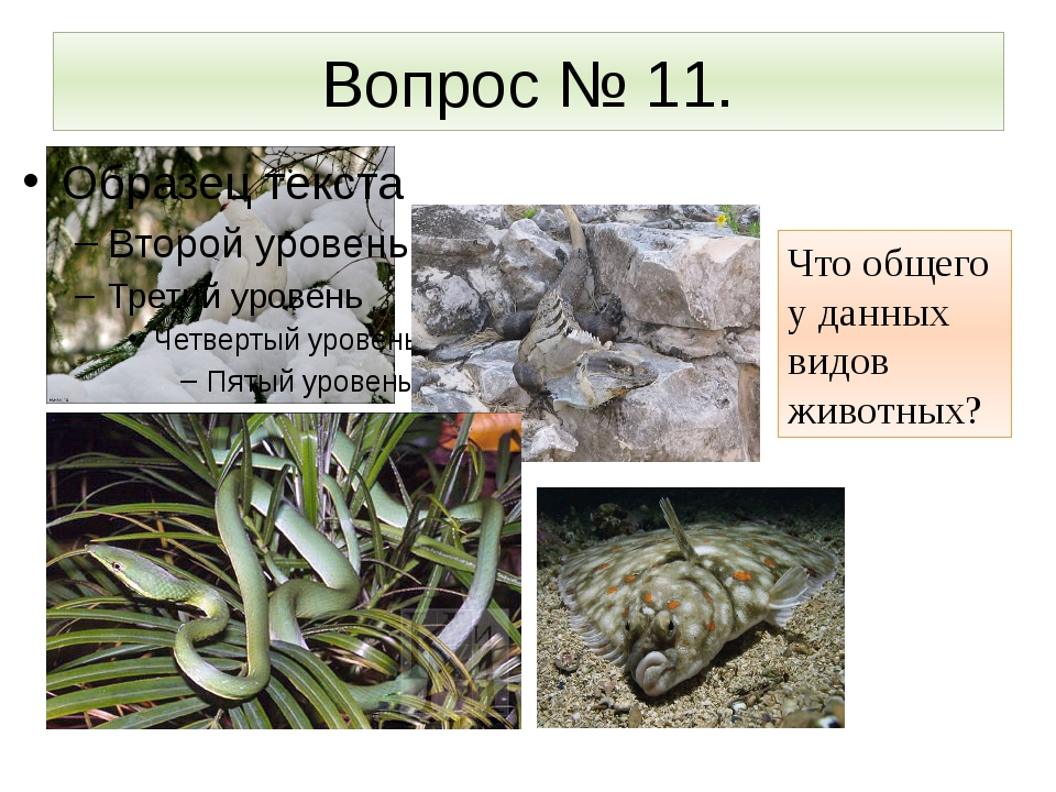 Вопрос № 11. Что общего у данных видов животных?