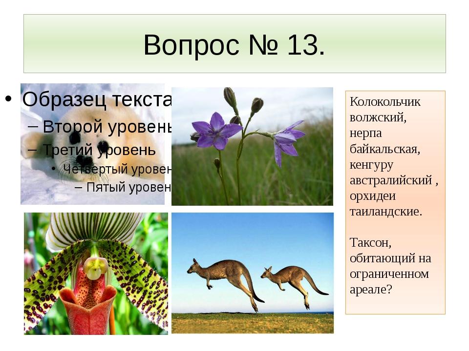 Вопрос № 13. Колокольчик волжский, нерпа байкальская, кенгуру австралийский ,...