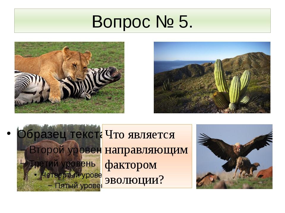 Вопрос № 5. Что является направляющим фактором эволюции?