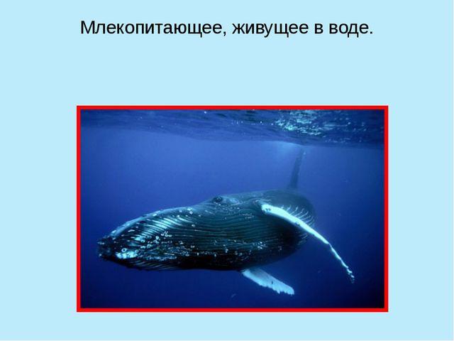 Млекопитающее, живущее в воде.