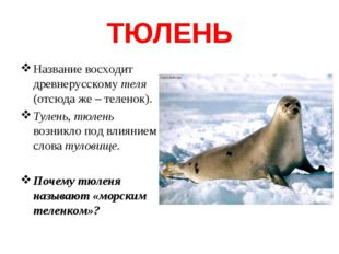 ТЮЛЕНЬ Название восходит древнерусскому теля (отсюда же – теленок). Тулень, т