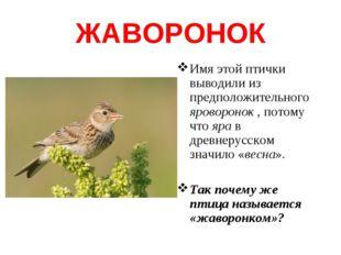 ЖАВОРОНОК Имя этой птички выводили из предположительного яроворонок , потому