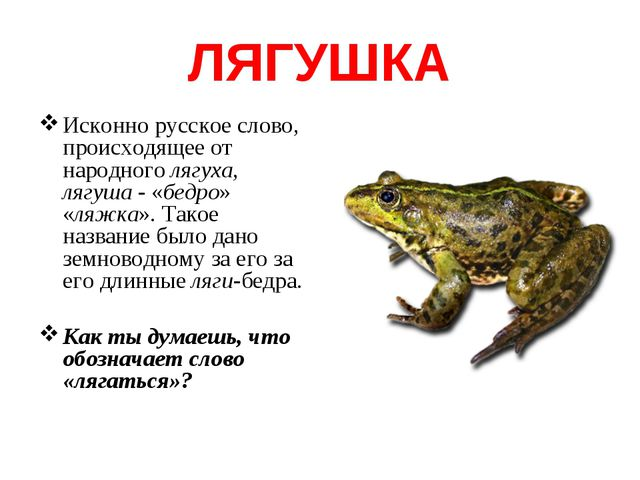 ЛЯГУШКА Исконно русское слово, происходящее от народного лягуха, лягуша - «бе...