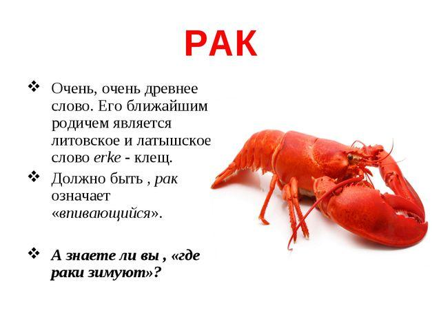 РАК Очень, очень древнее слово. Его ближайшим родичем является литовское и ла...