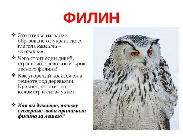 ФИЛИН Это птичье название образовано от украинского глагола квилити – «плакат...