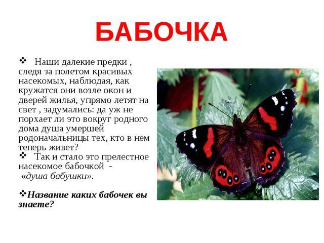 БАБОЧКА Наши далекие предки , следя за полетом красивых насекомых, наблюдая,...