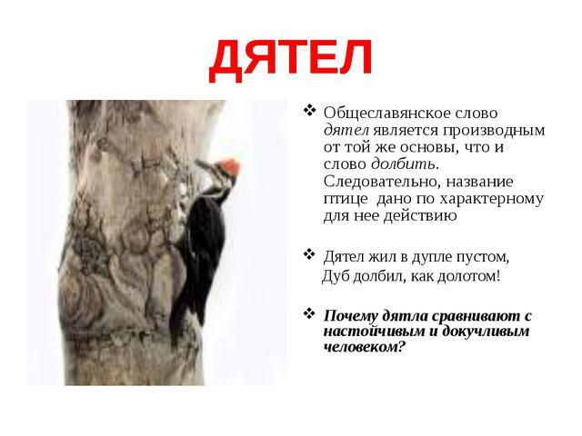 ДЯТЕЛ Общеславянское слово дятел является производным от той же основы, что и...