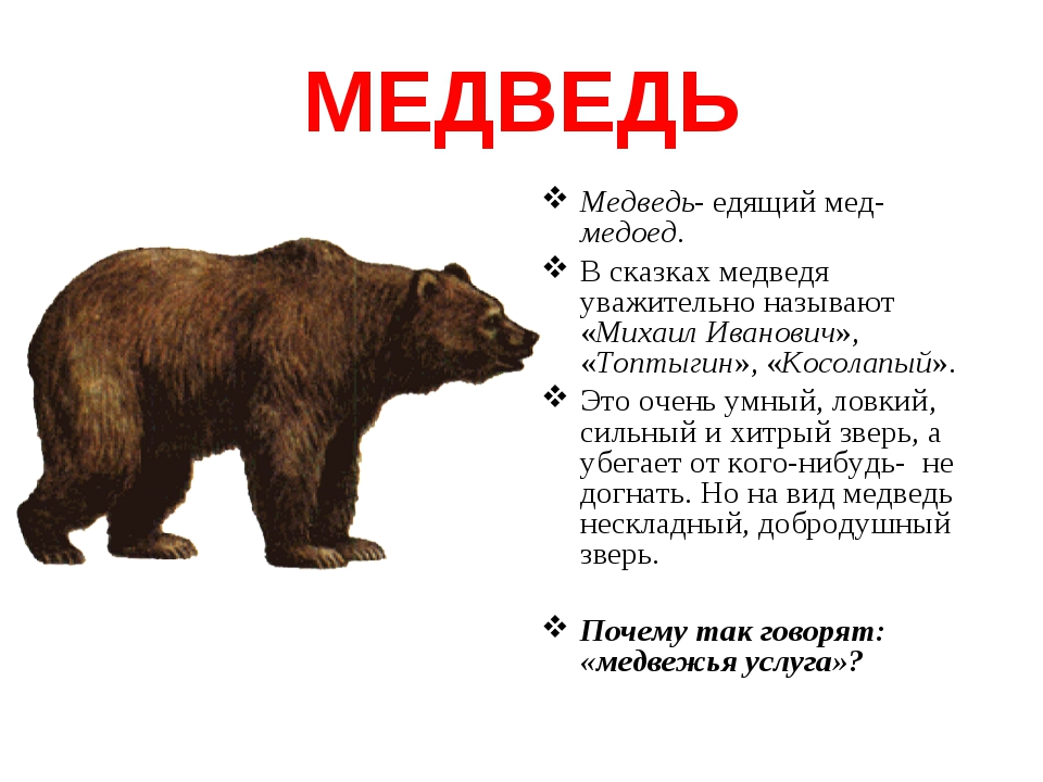 МЕДВЕДЬ Медведь- едящий мед-медоед. В сказках медведя уважительно называют «М...