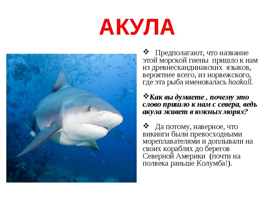 АКУЛА Предполагают, что название этой морской гиены пришло к нам из древнеска...