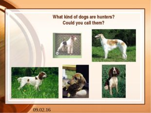 What kind of dogs are hunters? Could you call them?