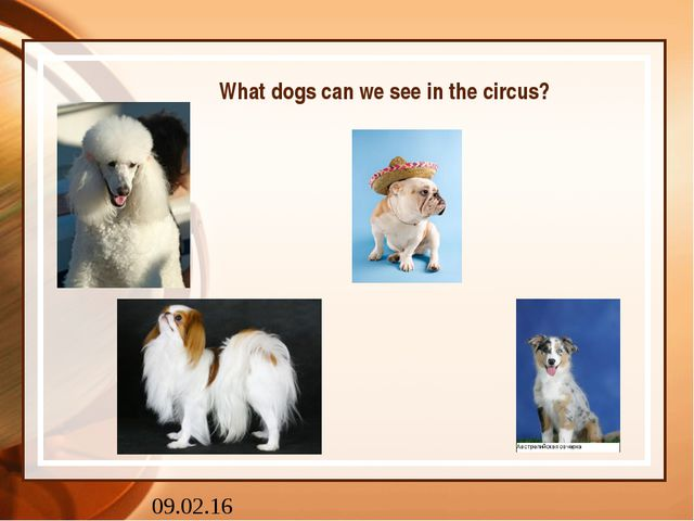 What dogs can we see in the circus?