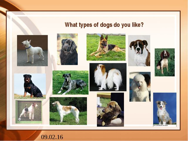 What types of dogs do you like?