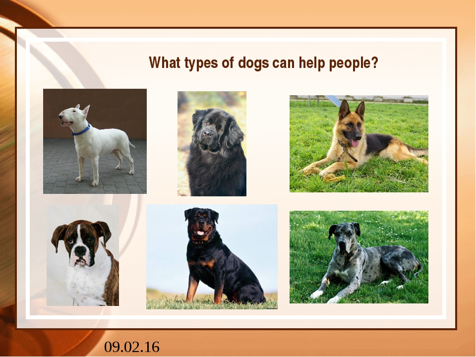 What types of dogs can help people?