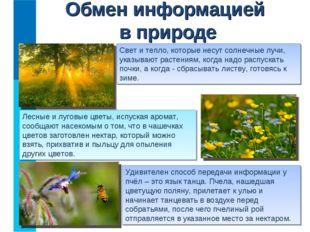 Лесные и луговые цветы, испуская аромат, сообщают насекомым о том, что в чаше