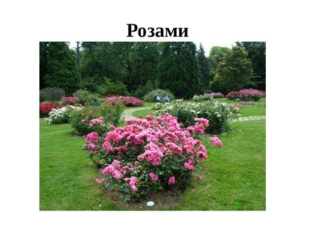 Розами
