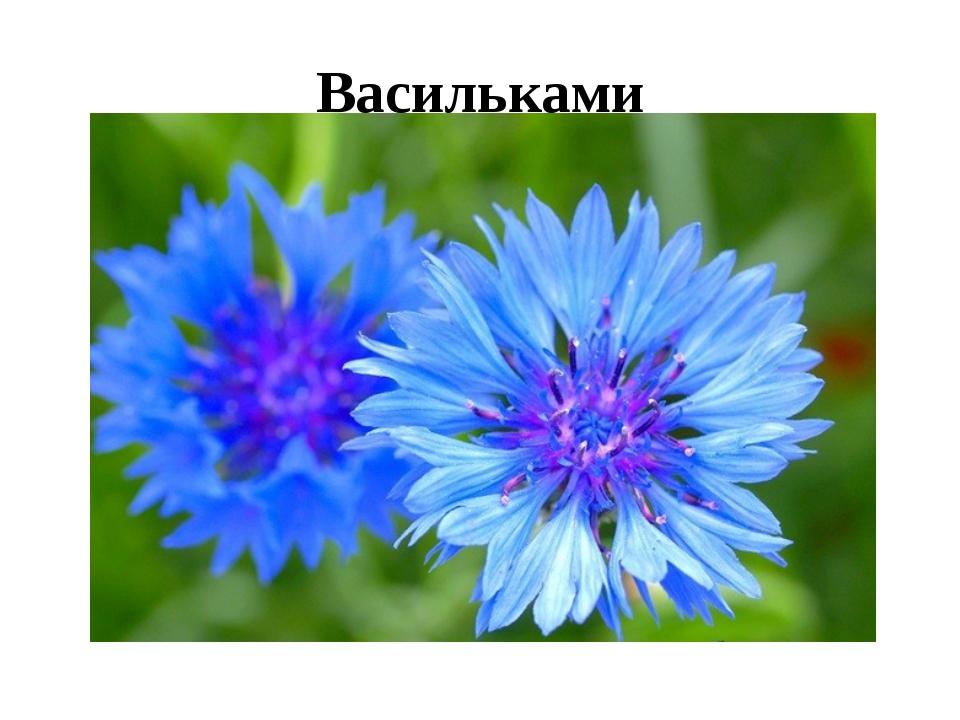 Васильками
