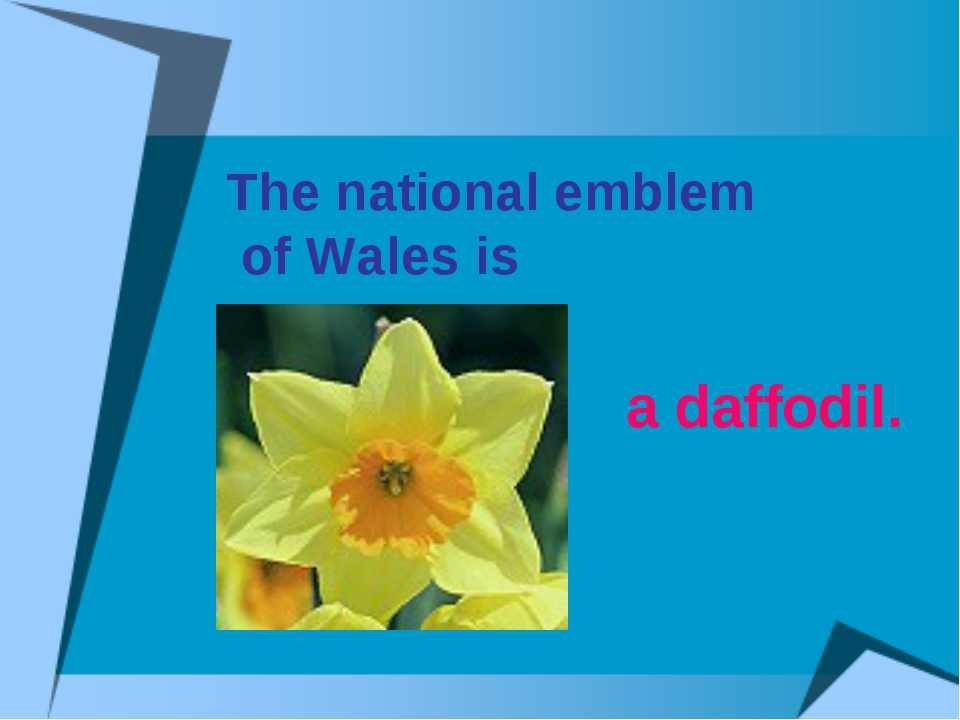 The national emblem of Wales is a daffodil.
