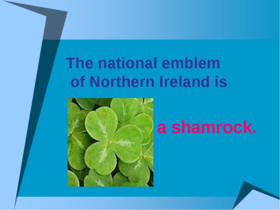 The national emblem of Northern Ireland is a shamrock.