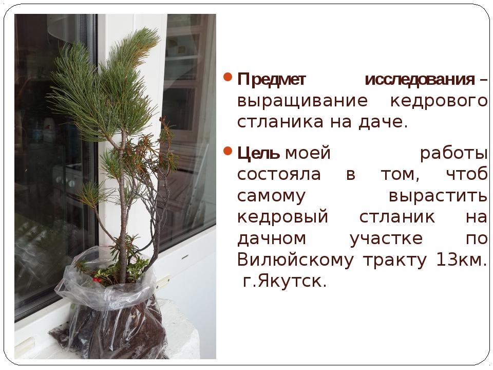 Предмет исследования– выращивание кедрового стланика на даче. Цельмоей рабо...