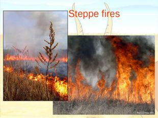 Steppe fires