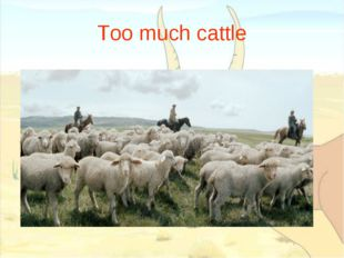 Too much cattle