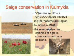 "Saiga conservation in Kalmykia ""Chernije zemli"" – a UNESCO nature reserve - i"