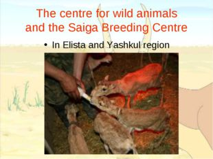 The centre for wild animals and the Saiga Breeding Centre In Elista and Yashk