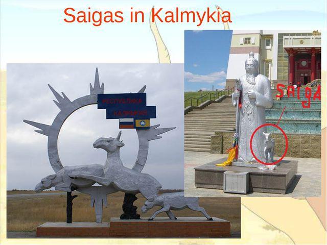 Saigas in Kalmykia