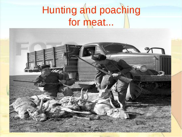 Hunting and poaching for meat...