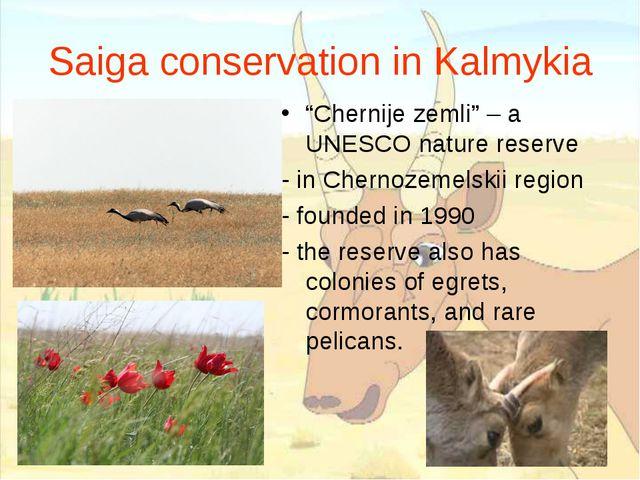 "Saiga conservation in Kalmykia ""Chernije zemli"" – a UNESCO nature reserve - i..."