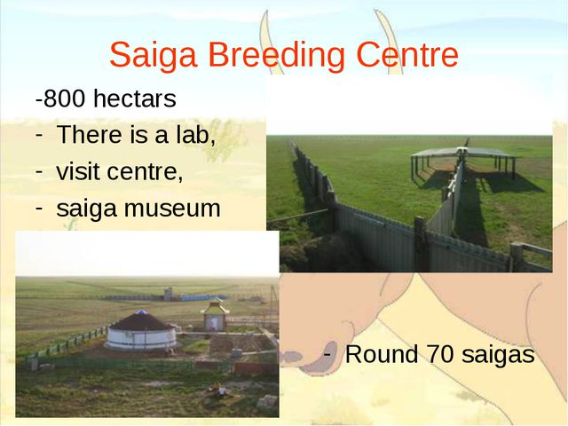 Saiga Breeding Centre -800 hectars There is a lab, visit centre, saiga museum...