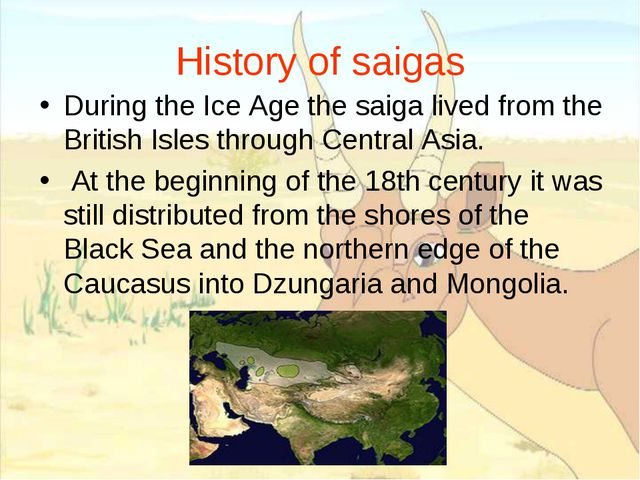 History of saigas During the Ice Age the saiga lived from the British Isles t...