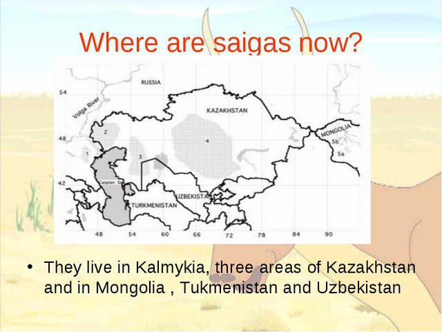 Where are saigas now? They live in Kalmykia, three areas of Kazakhstan and in...