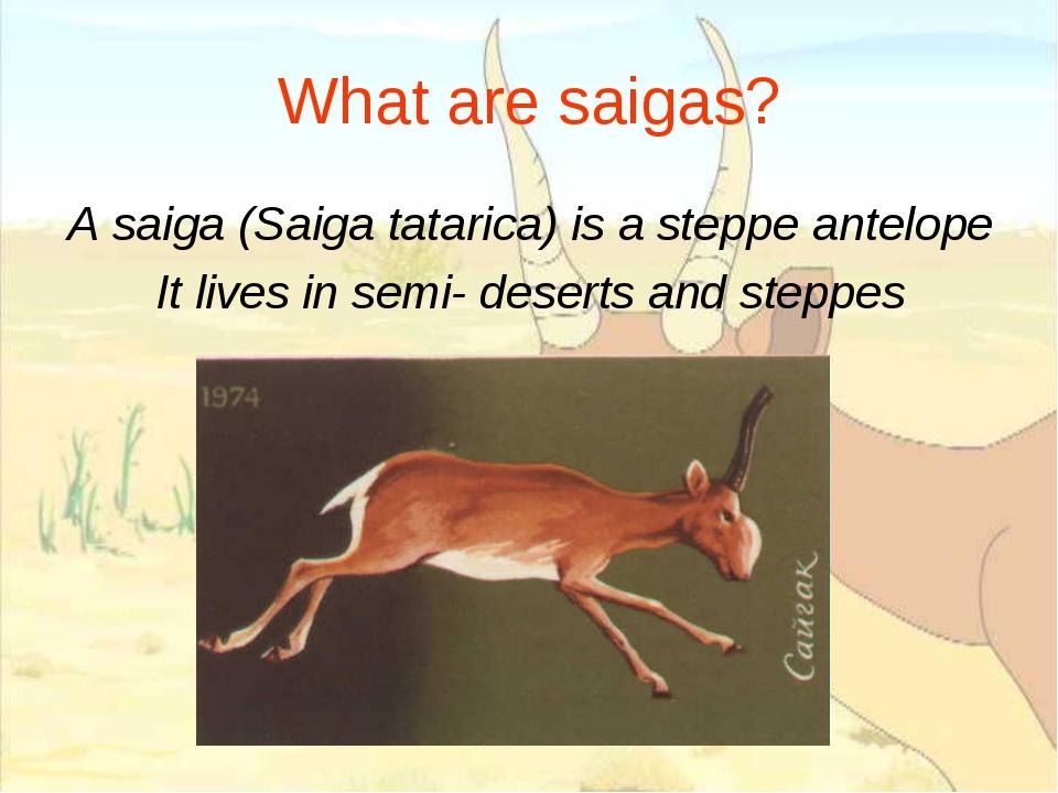 What are saigas? A saiga (Saiga tatarica) is a steppe antelope It lives in se...