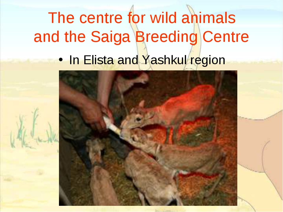 The centre for wild animals and the Saiga Breeding Centre In Elista and Yashk...