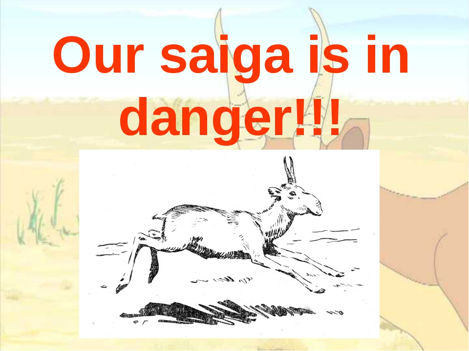 Our saiga is in danger!!!