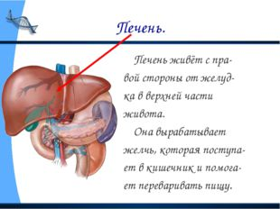 Печень. Печень живёт с пра- вой стороны от желуд- ка в верхней части живота.