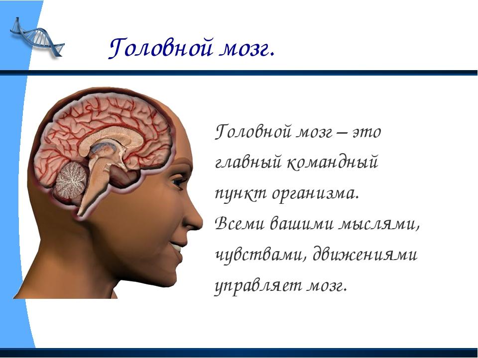 Головной мозг. Головной мозг – это главный командный пункт организма. Всеми...