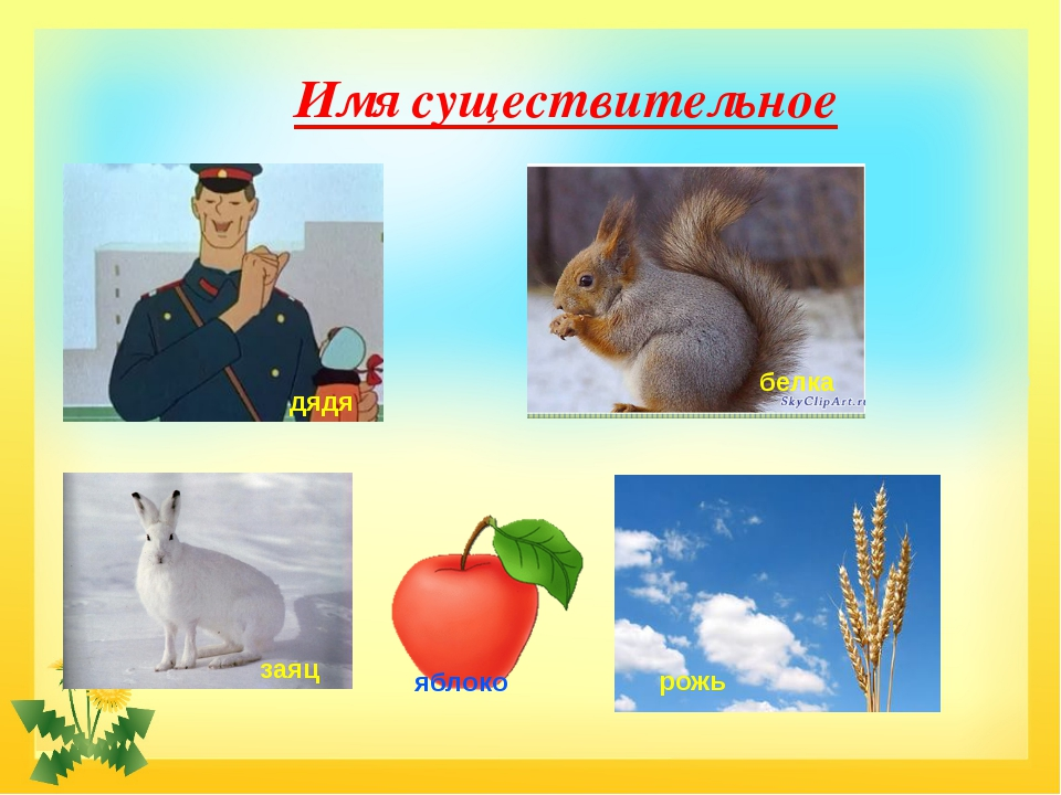 Имя существительное белка дядя заяц яблоко рожь