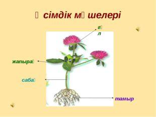 Өсімдік мүшелері гүл тамыр жапырақ сабақ