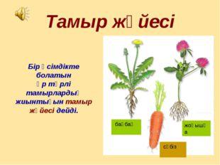 Тамыр жүйесі Бір өсімдікте болатын әр түрлі тамырлардың жиынтығын тамыр жүйес