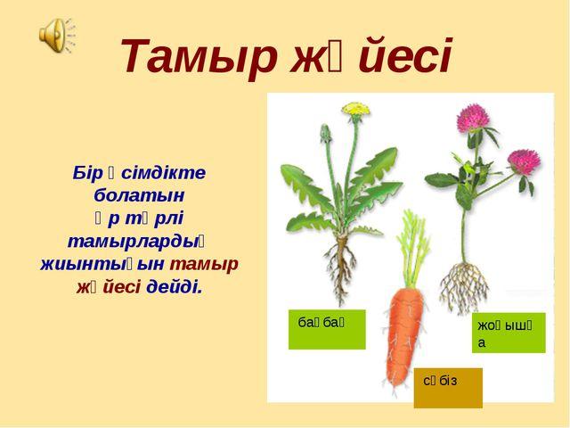 Тамыр жүйесі Бір өсімдікте болатын әр түрлі тамырлардың жиынтығын тамыр жүйес...