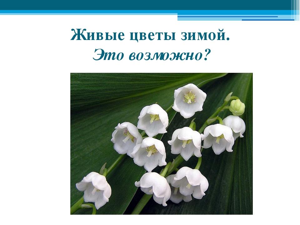 Живые цветы зимой. Это возможно?