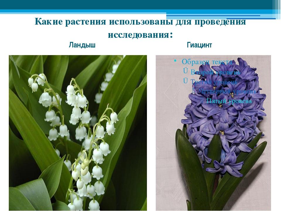 Какие растения использованы для проведения исследования: Ландыш Гиацинт