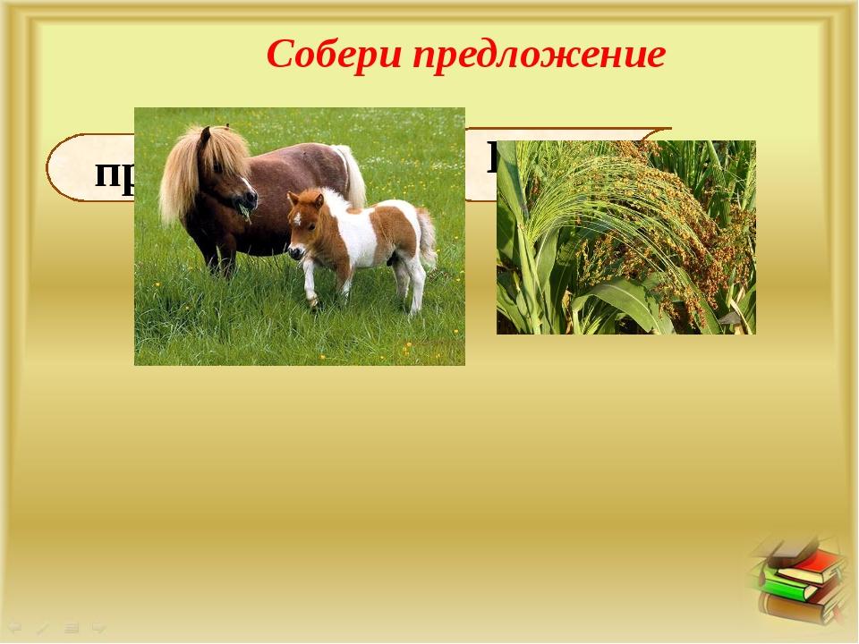 Собери предложение просо. ест Пони