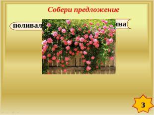 Собери предложение з роз. Зина поливала кусты