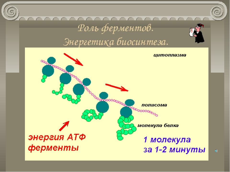 Роль ферментов. Энергетика биосинтеза.