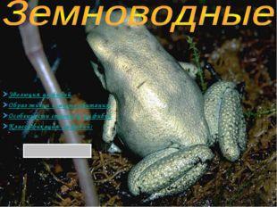 Эволюция амфибий Образ жизни и место обитания Особенности строения амфибий Кл