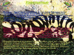 Хвостатые Хвостатые – другой отряд земноводных. Все они имеют вытянутое тело,